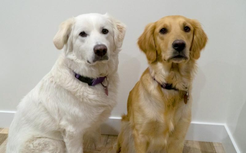 Marketing dogs Aspen and Layla